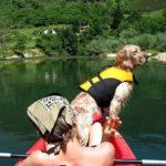 salvavidas-perros-canos-sella