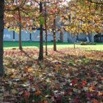 otoño 2011 003