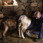 queseria-main-cabras